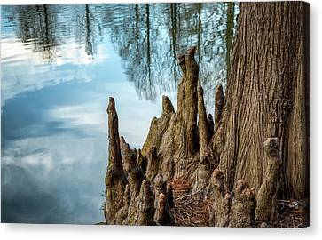 Canvas Print featuring the photograph Cypress Knees by James Barber