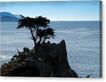 Cypress Point At Monterey Peninsula Canvas Print by Lyle  Huisken