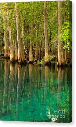 Cypress Reflections In Blue Canvas Print