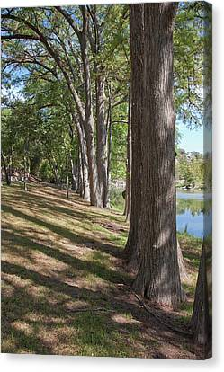 Cypress Shade Canvas Print by James Woody