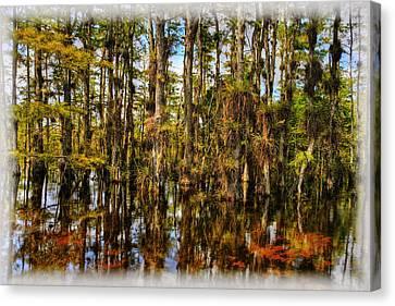 Bromeliad Canvas Print - Cypress Strand Everglades by Jim Dohms