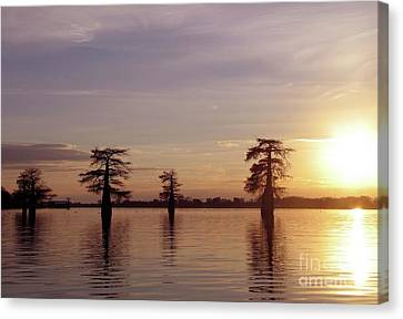 Cypress Sunset Canvas Print by Sheila Ping