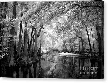 Cypress Swampland Canvas Print by Dan Carmichael