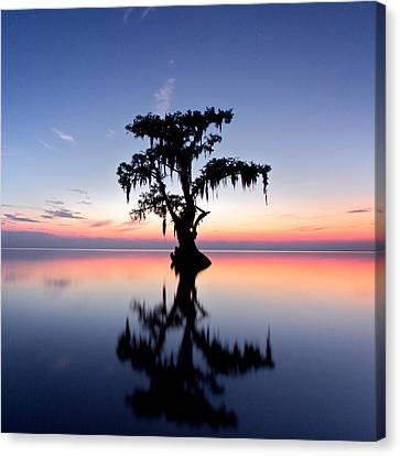 Canvas Print featuring the photograph Cypress Tree by Evgeny Vasenev