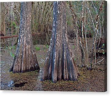 Cypress Trees At Duck Pond Canvas Print by Juergen Roth