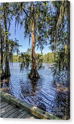 Canvas Print - Cypress Trees In Tchefuncte River by Kathleen K Parker