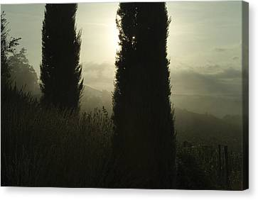 Cypress Trees Looming In Front Canvas Print by Todd Gipstein