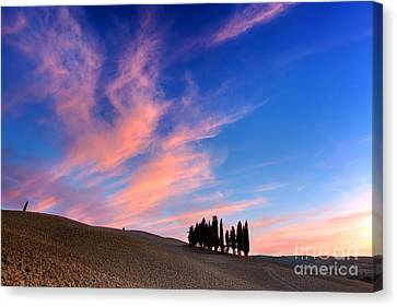 Cypress Trees On The Field In Tuscany, Italy At Sunset Canvas Print by Michal Bednarek