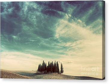 Cypress Trees On The Field In Tuscany, Italy At Sunset. Vintage Canvas Print by Michal Bednarek