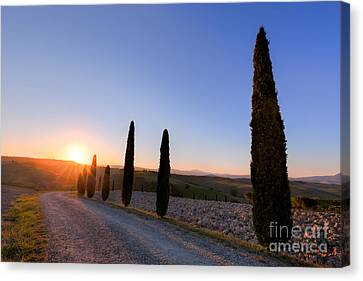 Cypress Trees Road In Tuscany, Italy At Sunrise. Val D'orcia Canvas Print by Michal Bednarek