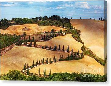 Cypress Trees Serpentine Road In Tuscany, Italy. Amazing Tuscan Landscape Canvas Print by Michal Bednarek