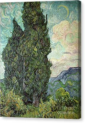 Cypresses Canvas Print by Vincent Van Gogh