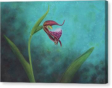 Cypripedium Arietinum V Canvas Print
