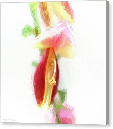 Cytisus Scoparius Firefly Ginster Canvas Print