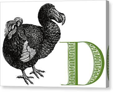 D Dodo Canvas Print by Thomas Paul