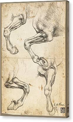 Monotone Canvas Print - Da Vinci Horse Leg Study By Da Vinci by Tony Rubino