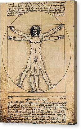 Da Vinci Rule Of Proportions Canvas Print by Science Source