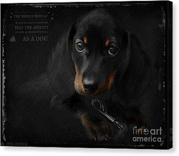Dachshund - Puppy Love Canvas Print by iMia dEsigN