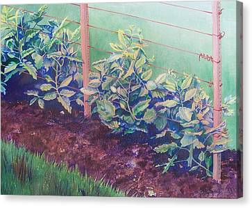 Daddy's Bean Row Canvas Print by Tina Farney