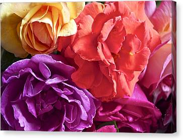 Dad's Roses Canvas Print by Gwyn Newcombe