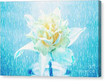 Daffodil Flower In Rain. Digital Art Canvas Print