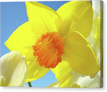 Daffodil Flowers Artwork 18 Spring Daffodils Art Prints Floral Artwork Canvas Print by Baslee Troutman