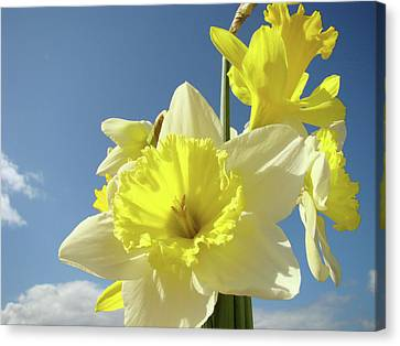 Daffodil Flowers Artwork Floral Photography Spring Flower Art Prints Canvas Print by Baslee Troutman
