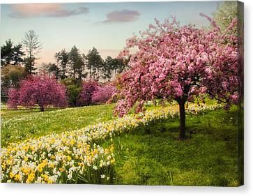 Daffodil Heaven Canvas Print