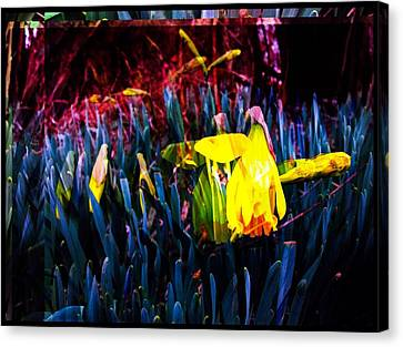 Daffodil In Abstract Canvas Print