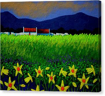 Daffodil Meadow Canvas Print by John  Nolan