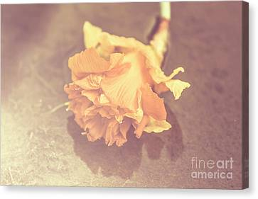 Aging Canvas Print - Daffodil Reflections  by Jorgo Photography - Wall Art Gallery