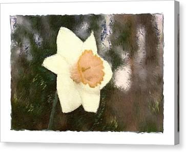 Daffodil Canvas Print by Sandy Belk