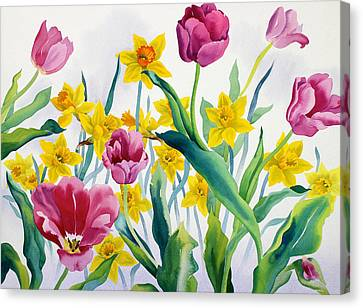 Daffodils And Tulips Canvas Print by Christopher Ryland