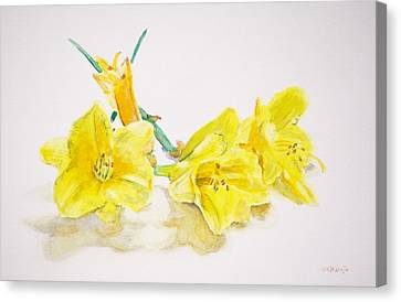 Daffodils Canvas Print by Christopher Reid