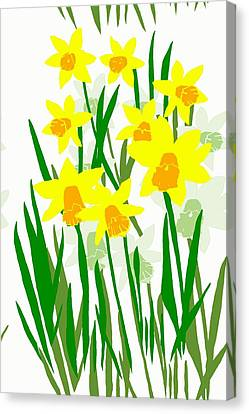 Daffodils Drawing Canvas Print