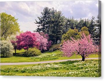 Daffodils On A Hill Canvas Print
