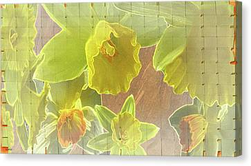 Daffy Daffodils Canvas Print by Debra     Vatalaro