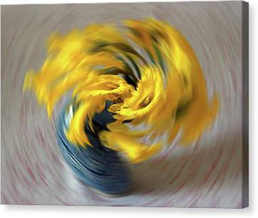 Dafs Canvas Print - Dafs In A Spin by Colin Shearer