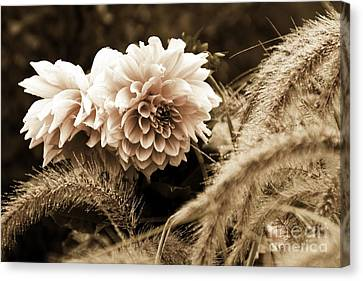 Dahlia After A Shower Canvas Print by Marcia Lee Jones
