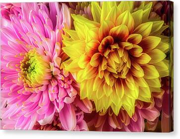 Dahlia And Mum Canvas Print