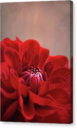 Canvas Print featuring the photograph Dahlia Dalliance  by Marion Cullen