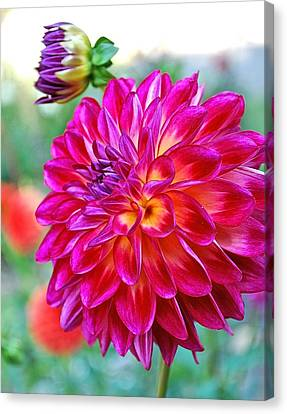 Dahlia Fuchsia Surprise  Canvas Print
