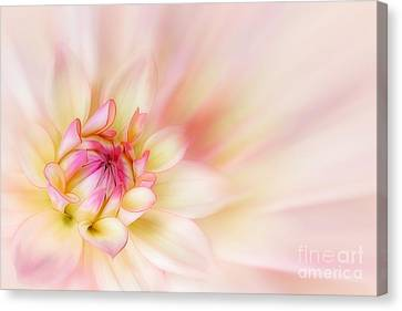 Dahlia Canvas Print by John Edwards