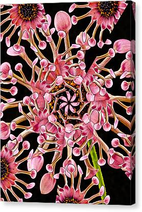 Dahlia Kaleidoscope By Jean Noren Canvas Print