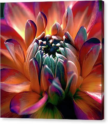 Dahlia Multi Colored Squared Canvas Print by Julie Palencia