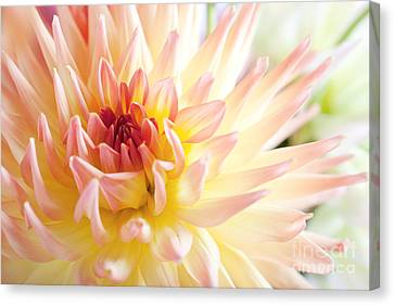 Soft Pastel Canvas Print - Dahlia by Nailia Schwarz