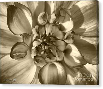 Dahlia Named Who Dun It Canvas Print