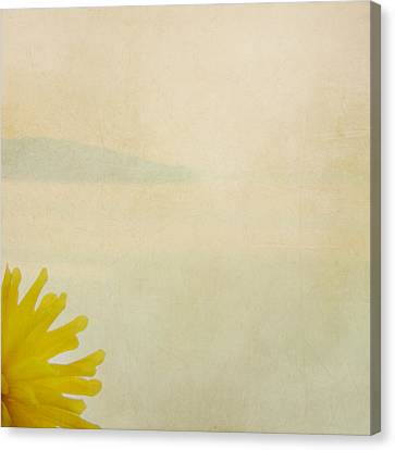 Canvas Print featuring the photograph Dahlia Rising by Sally Banfill