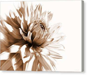 Dahlia Sepial Flower Canvas Print by Jennie Marie Schell