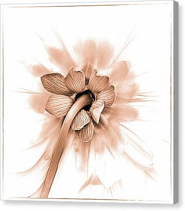 Canvas Print featuring the photograph Dahlia Shyness by Julie Palencia